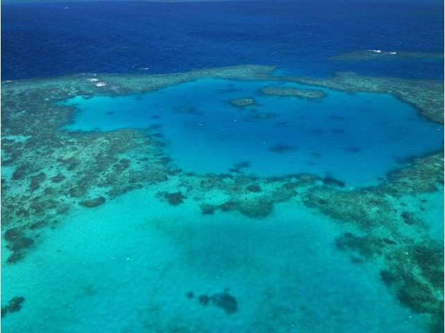 有从容不迫的大海龟,有青紫色的巨型海蚌,和这些大海里的主人嬉戏相伴